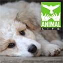 ico_animallife
